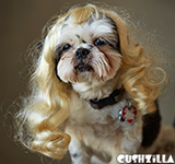 Dog Wig / Cat Wig: Cushzilla Wavy Blonde Wig for Dogs & Cats