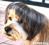 Cat Wig / Dog Wig: Cushzilla Cat Lady Salt-n-Pepper Bowl Cut Wig