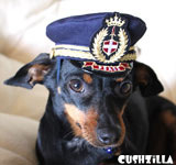 Captain Kitty Pilot Hat for Cat or Dog - XS