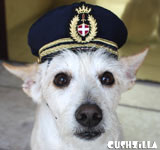 Pilot Hat for Dogs - Captain Dog Hat in SMALL from Cushzilla