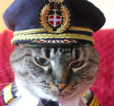Small Pilot Hat for Cat