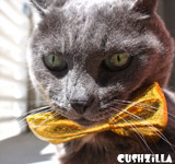 Cat Bow Tie / Dog Bow Tie in Sin Kitty Gold from Cushzilla