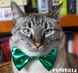 Bow Tie for Cats / Bow Tie for Dogs - Sparkly GREEN