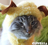 Sheep Costume for Cats & Dogs