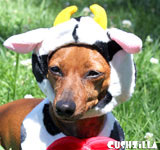 Happy Cow Costume for Cats & Dogs from Cushzilla