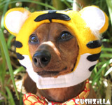 Tiger Costume for Dog or Cat