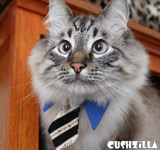 Necktie for Dog / Necktie for Cat - BLUE
