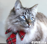 Cat Necktie / Dog Necktie - Prep School Plaid Necktie from Cushzilla