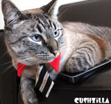 Red Business Tie for Dogs & Cats