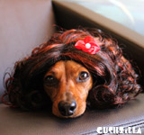 Cat Wig / Dog Wig: Cushzilla Curly Brunette Wig for Cats & Dogs