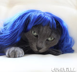 Kitty Purry Cat Wig or Dog Wig