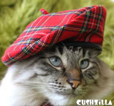 Plaid Hat for Cats / Plaid Hat for Dogs