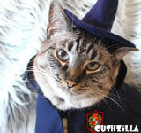 Yer a Hairy Wizard! Costume for Cats & Dogs from Cushzilla