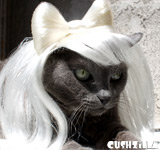 Lady Gaga Cat Wig / Lady Gaga Dog Wig - PLATINUM