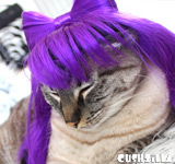 Cat Wig / Dog Wig: Cushzilla Lady Gaga Wig in Fancy Pants Purple