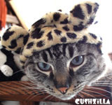Leopard Hat for Cat / Leopard Hat for Dog