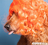 Orange Dog Wig / Orange Cat Wig