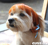 Red Pigtails Wig for Cats / Wig for Dogs