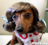 Dog Wig / Cat Wig: Cushzilla Brunette Pigtails Pet Wig