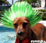 Green Spiky Punk Wig for Cats / Punk Wig for Dogs
