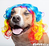 Dog Wig / Cat Wig: Cushzilla Curly Rainbow Wig for Dogs & Cats